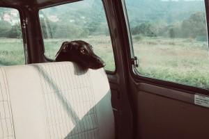 mascotas-viajes