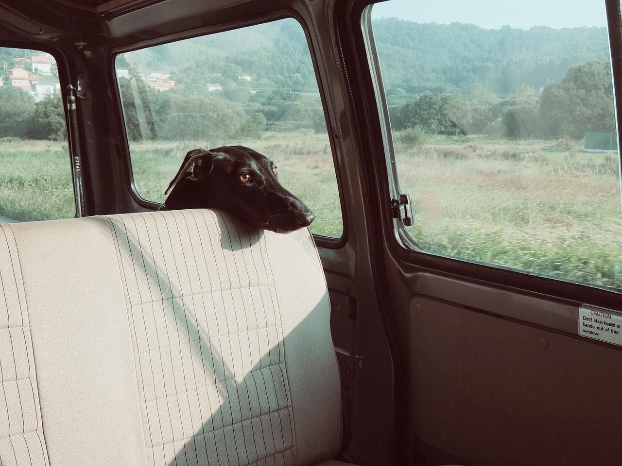 Cómo llevar correctamente a tu mascota en el coche